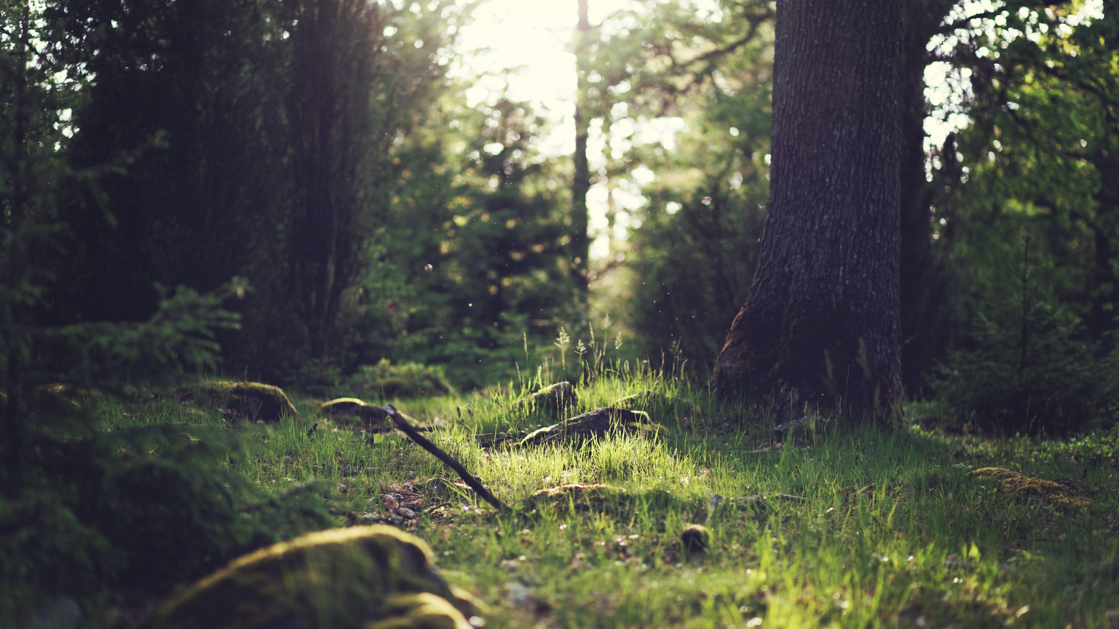 Best Forest 4K Wallpaper ImgPile