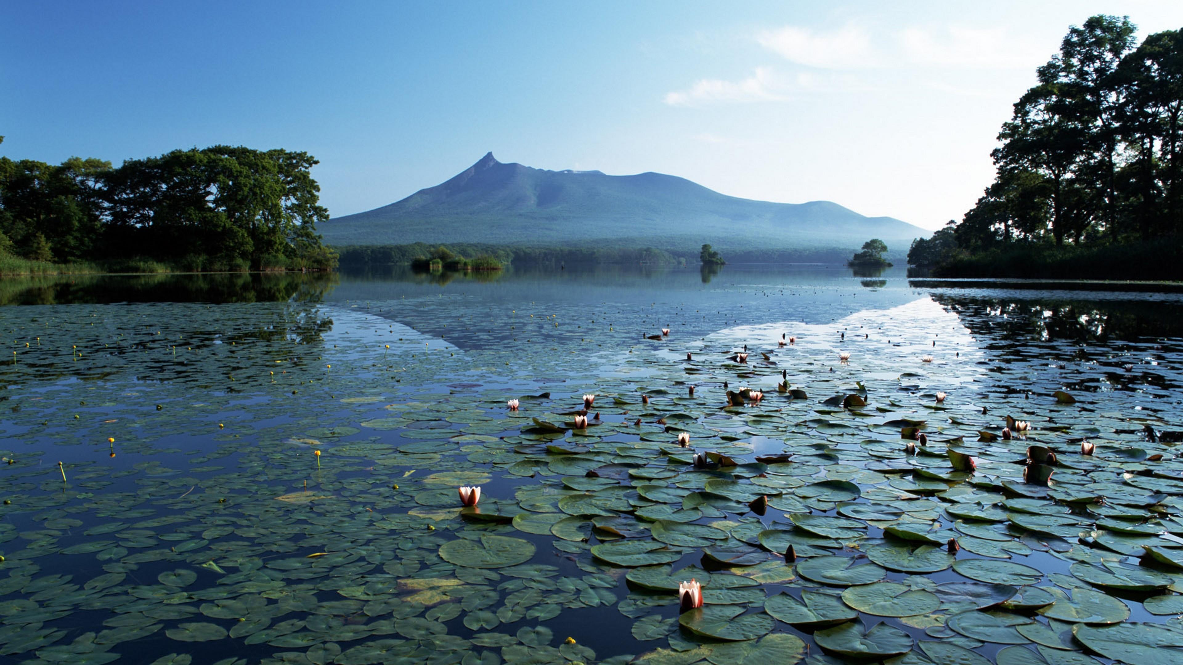 кувшинки озеро небо лес  № 1264633 без смс