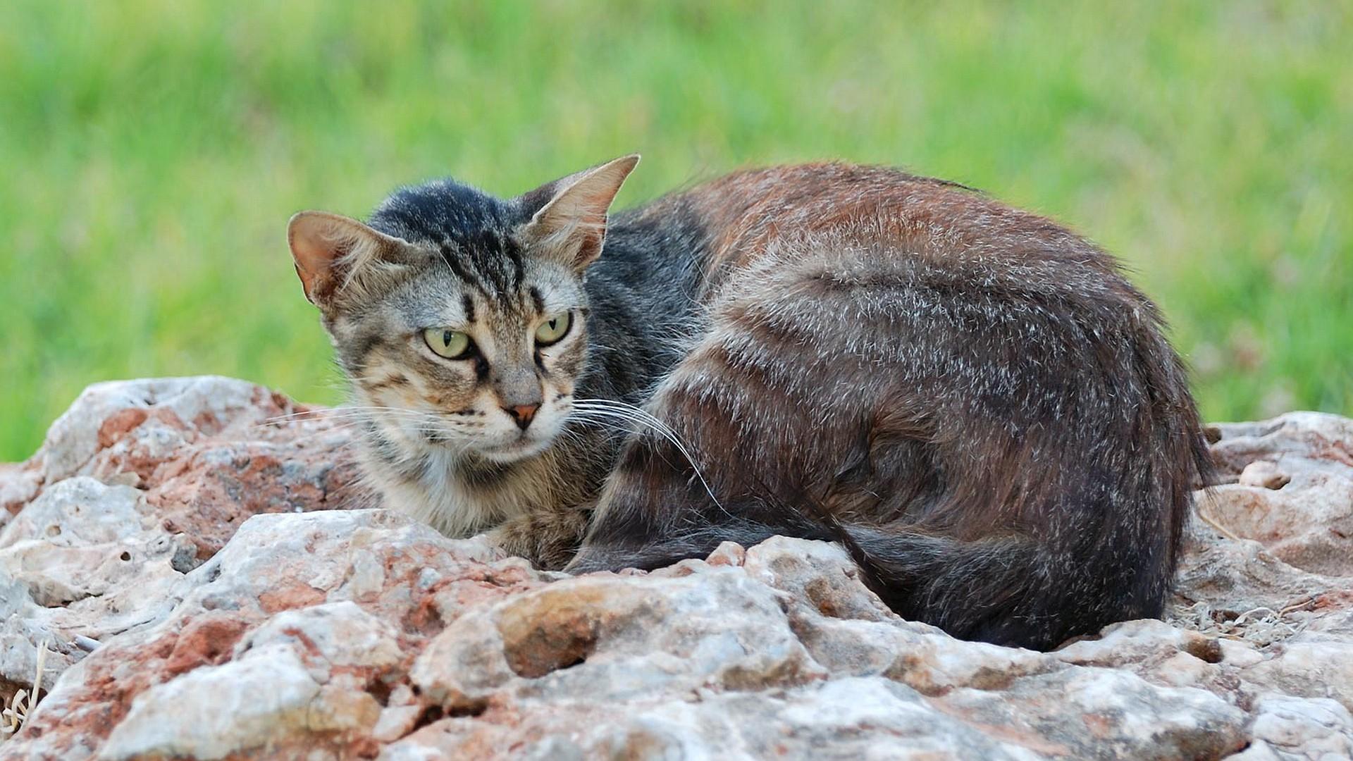 Важный кот на камне в саду онлайн