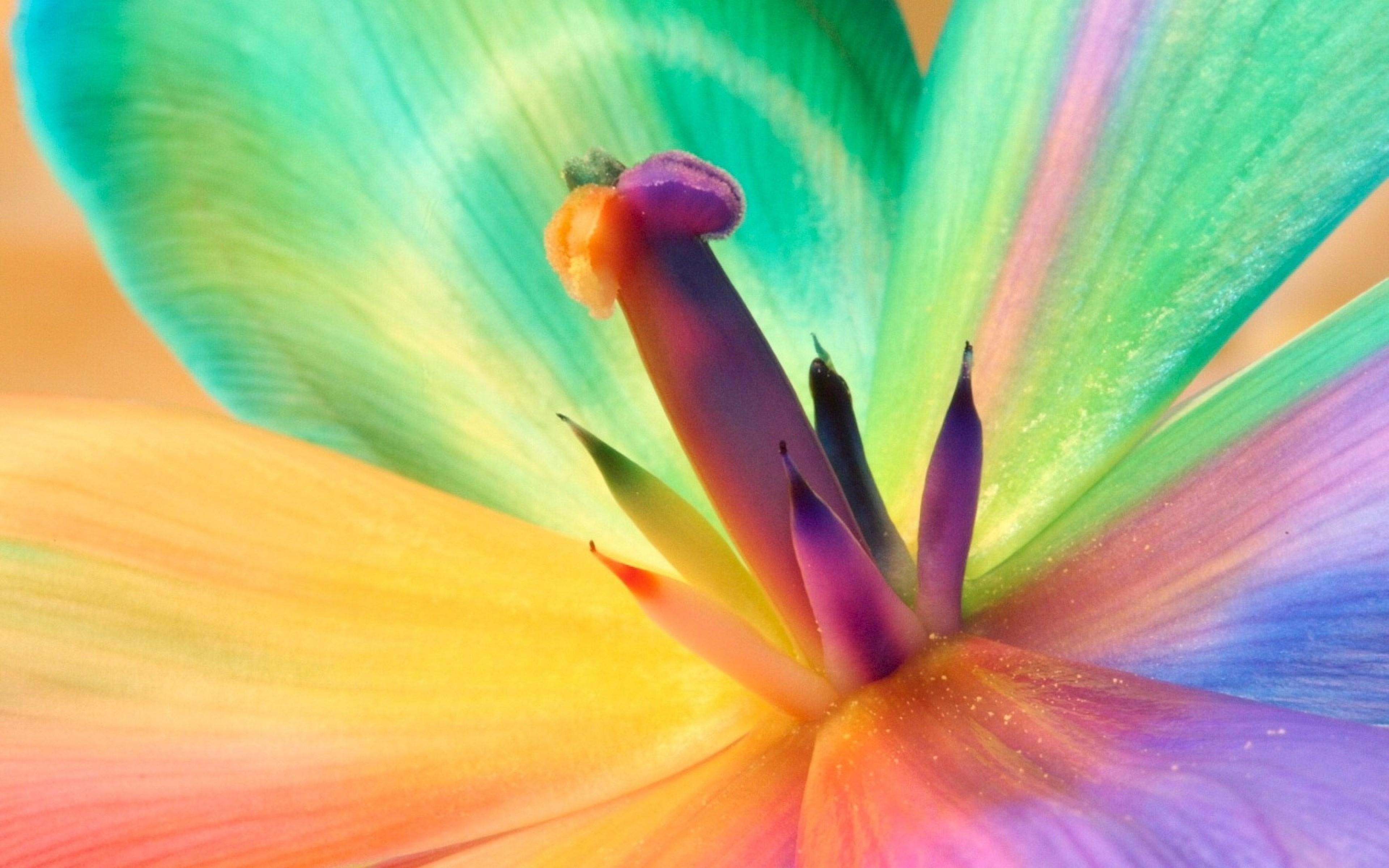 макро цветок пестик  № 3231590 бесплатно