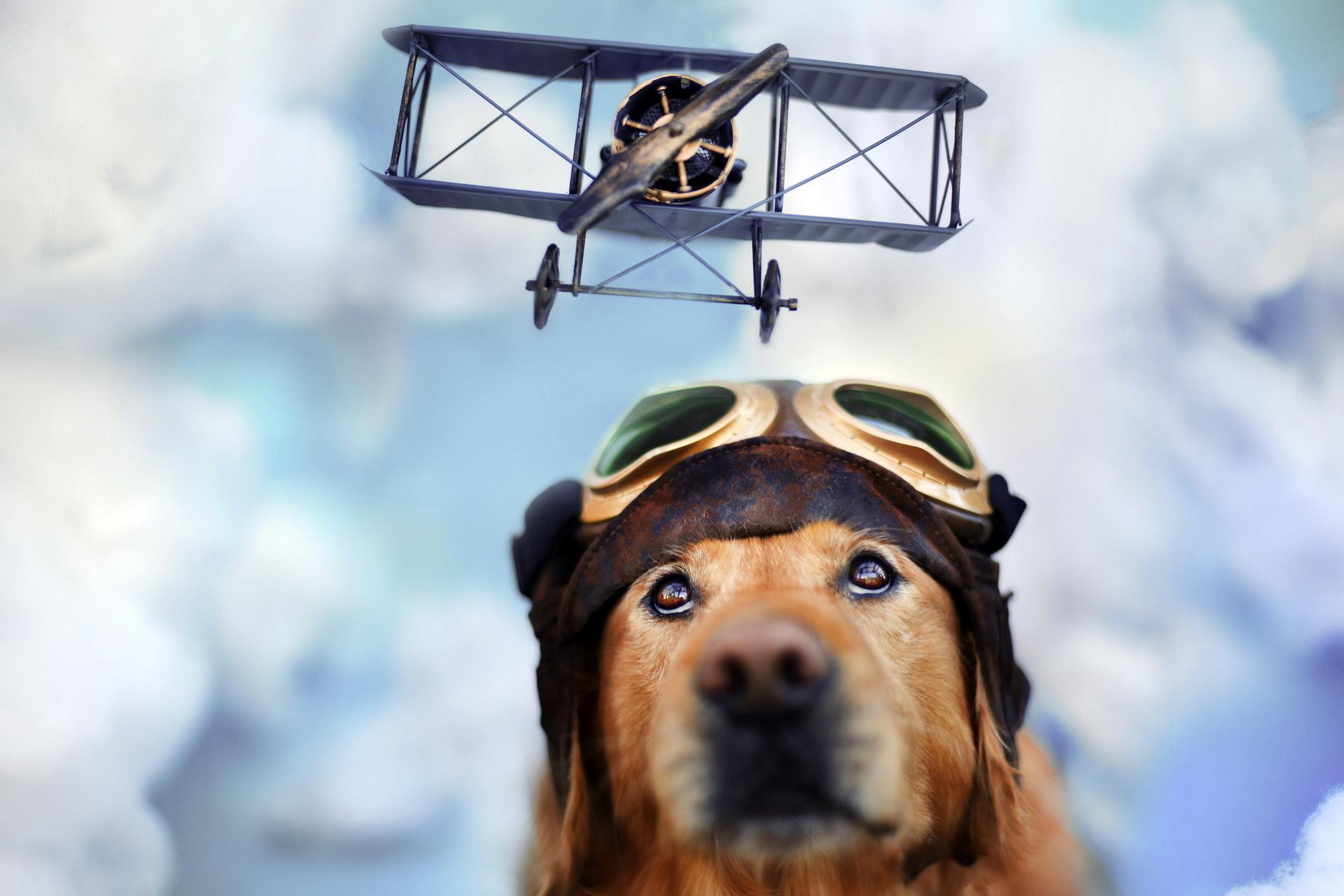 Собака с моделькой самолета без смс