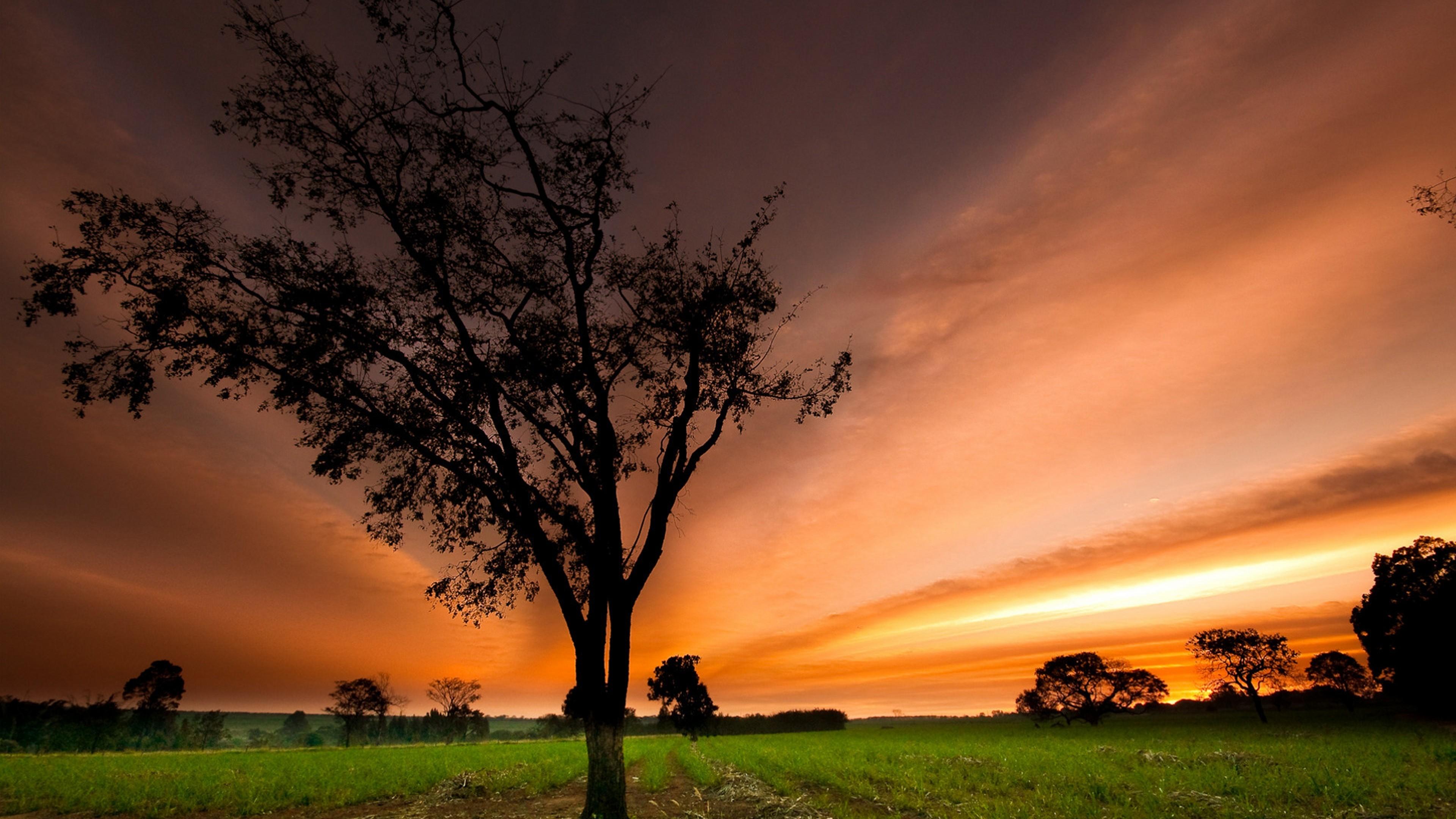 дерево поле небо закат загрузить