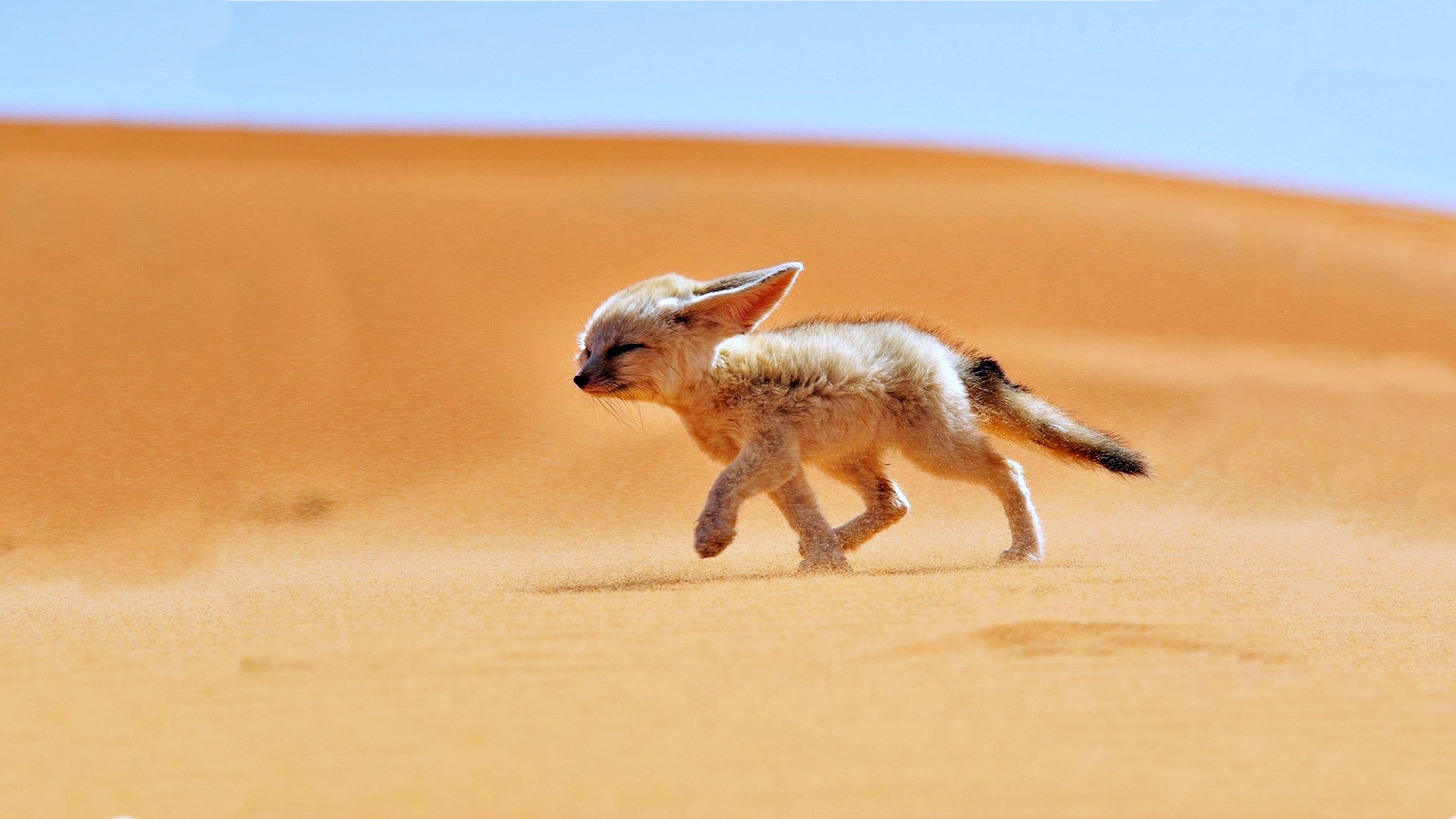 природа животные пустыня  № 3146337 без смс