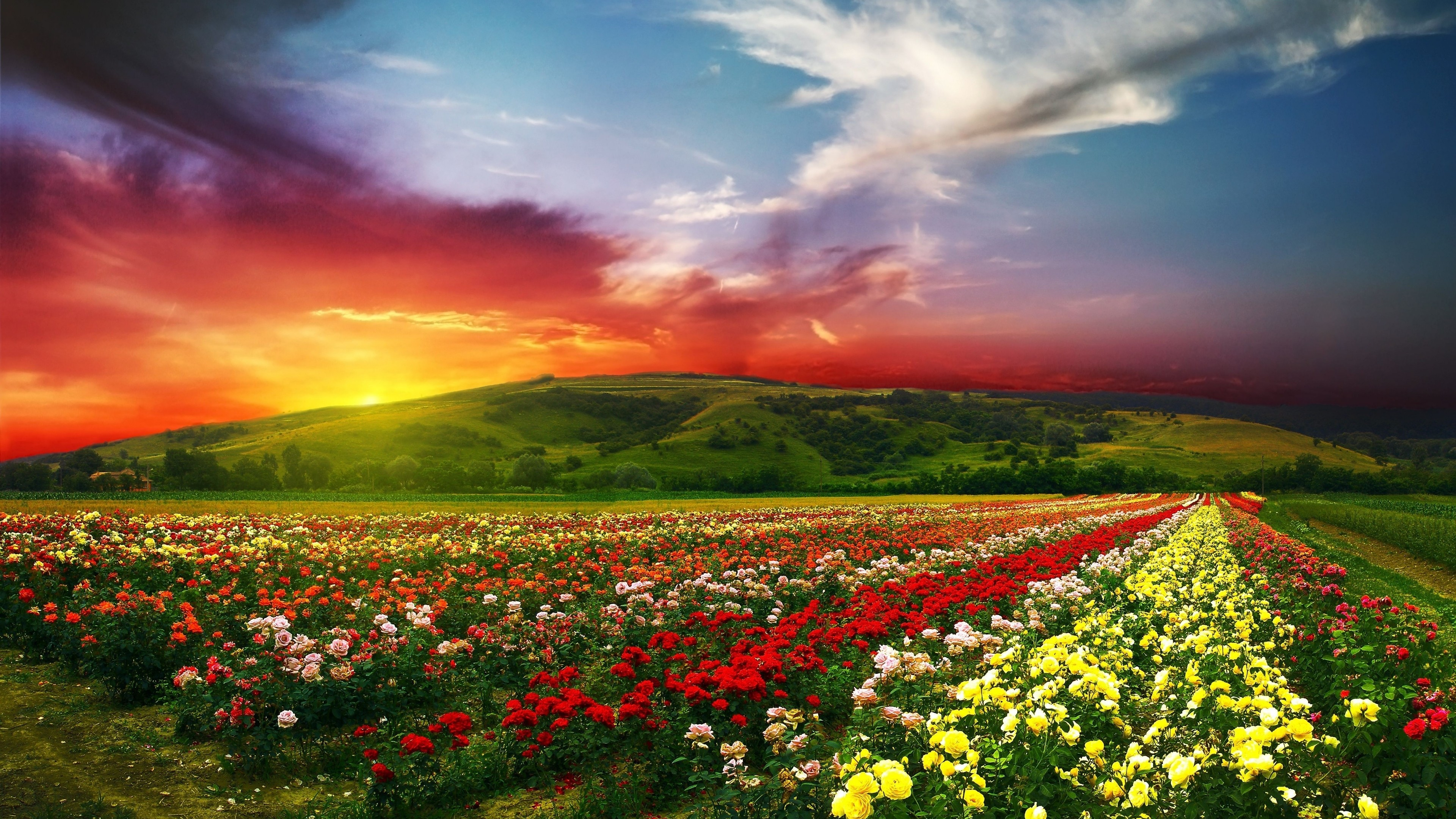 Download ultra hd 4k beautiful flowers with colorful clouds 877 liked like share izmirmasajfo