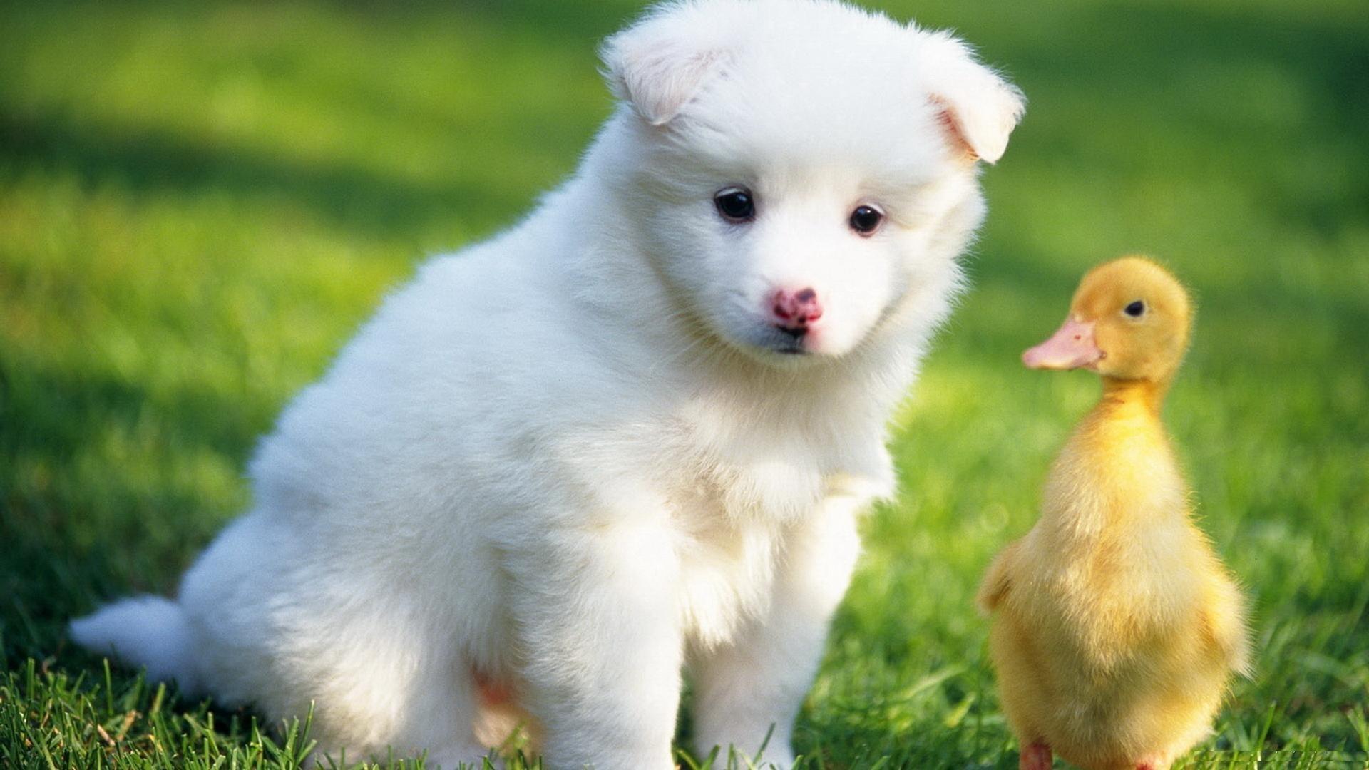Фото красивые с животными, малышам