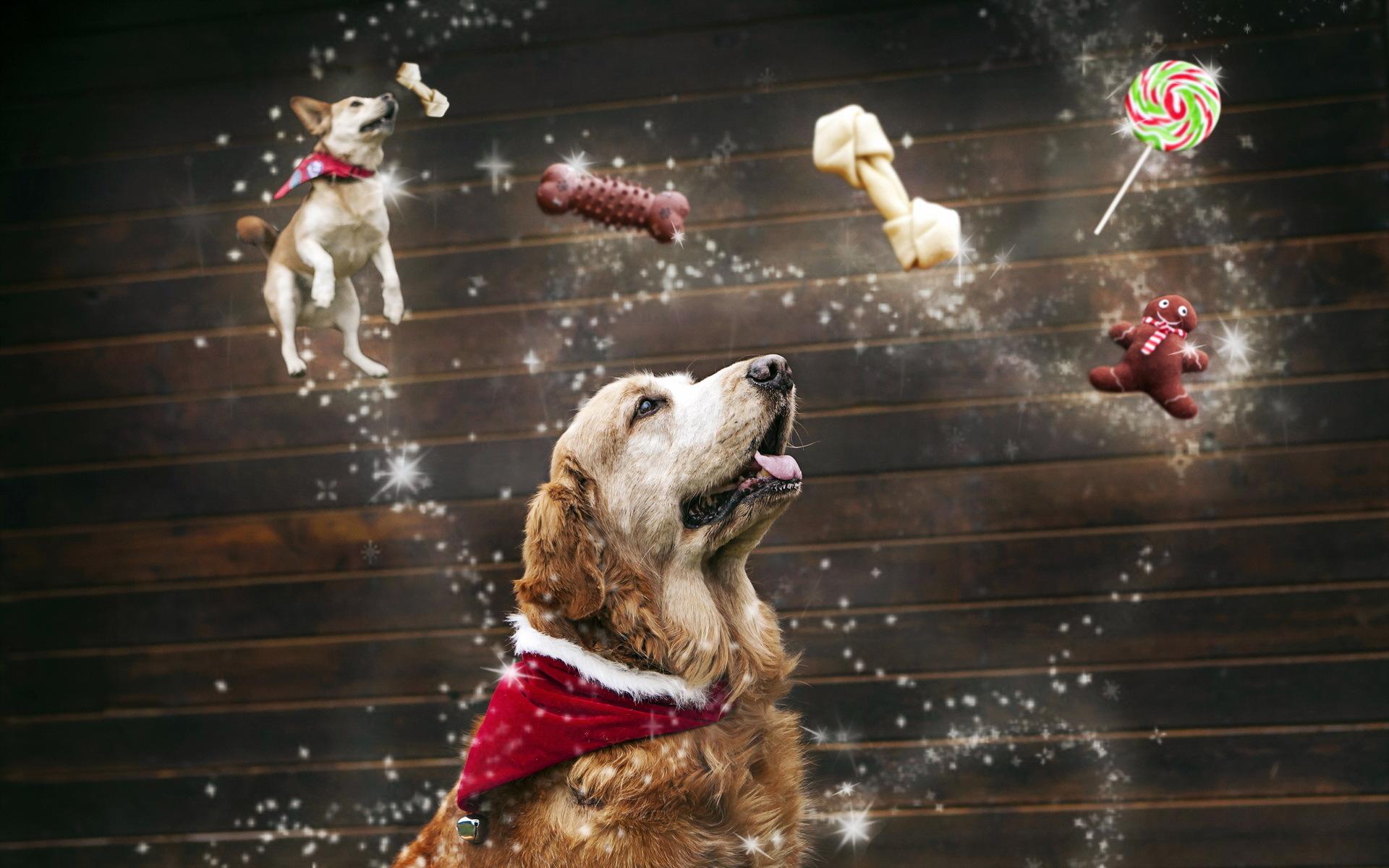 собака гирльянда скачать