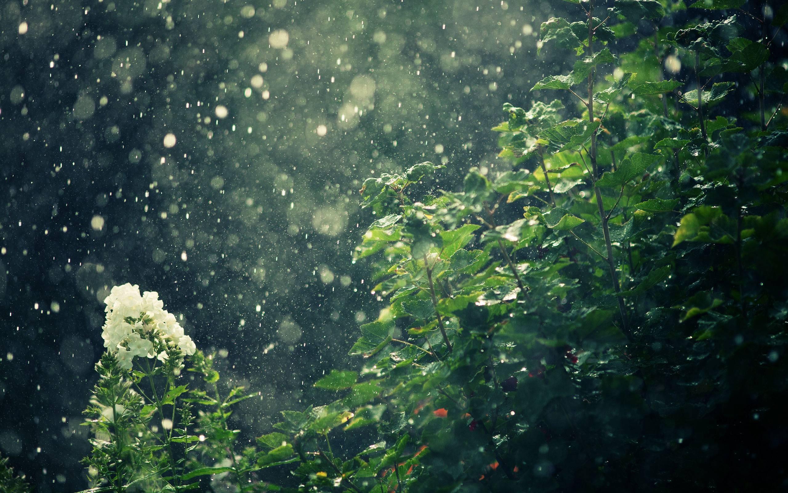 rain showers background summer - photo #1