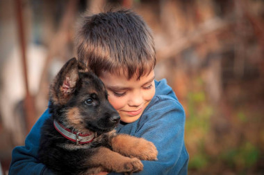 Make sure to have your pet's annual vaccinations for them to be immune for all types of viruses. Clearview Animal Hospital can assists you with that. They also offer other pet services such as wellness care, diagnosis, etc. Contact us now! 504-456-0240