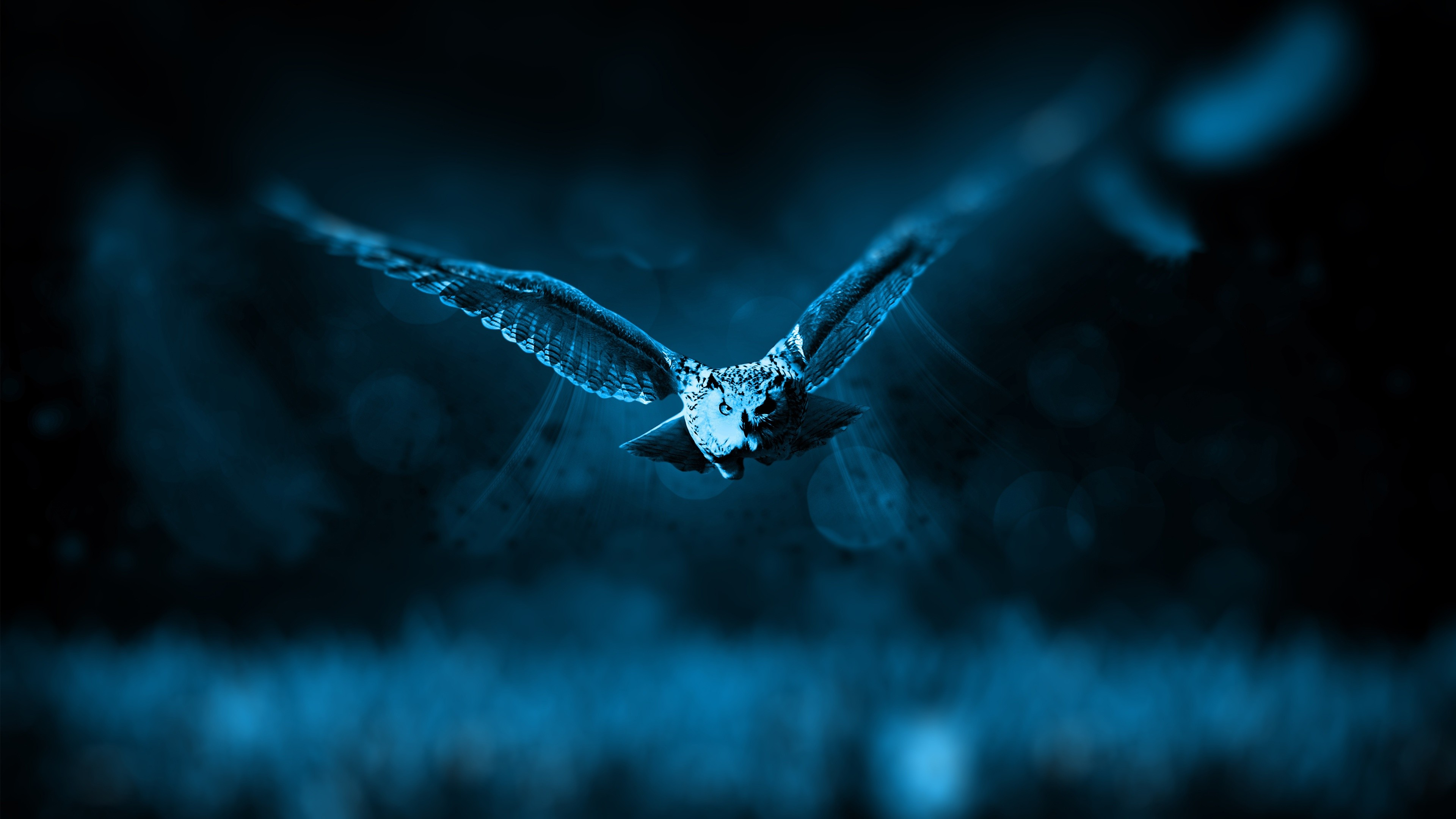 сова полет лес онлайн