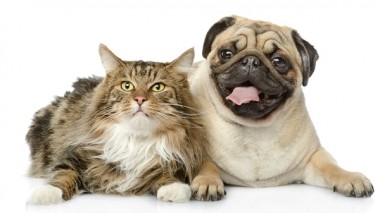 At Aspen Commons Animal Hospital, your pet will always receive the best treatment if he is in our care. So visit our clinic at Aurora and Southeast Denver are for proper diagnosis. Click the website link and make an appointment. https://aspencommonsvet.com/