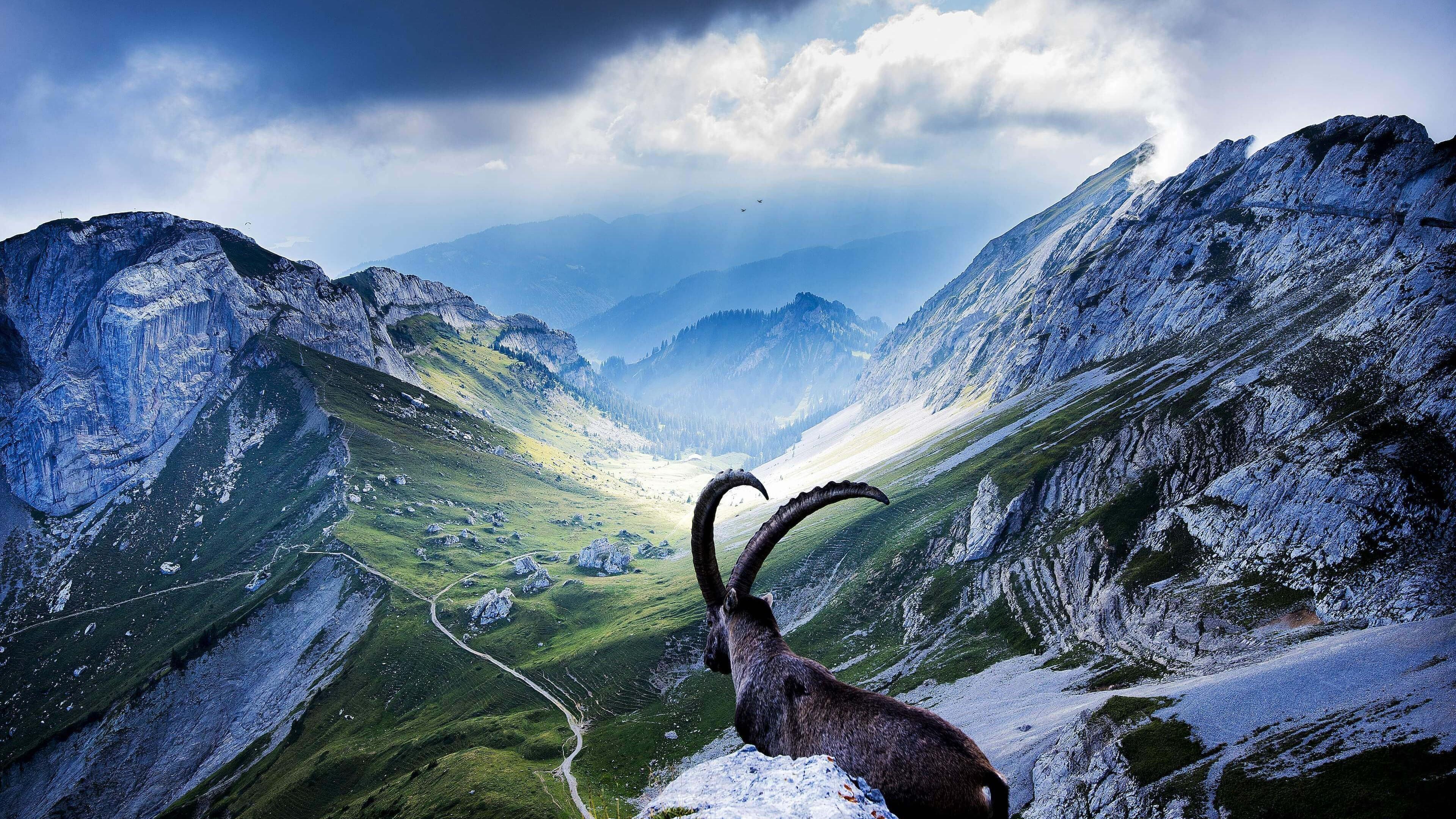 высотная гора онлайн