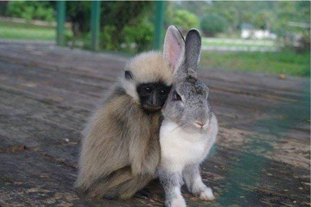 как уживутся обещьяна и кот кролик