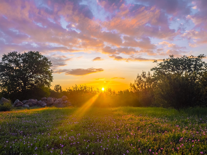 Лучи солнца в поле бесплатно