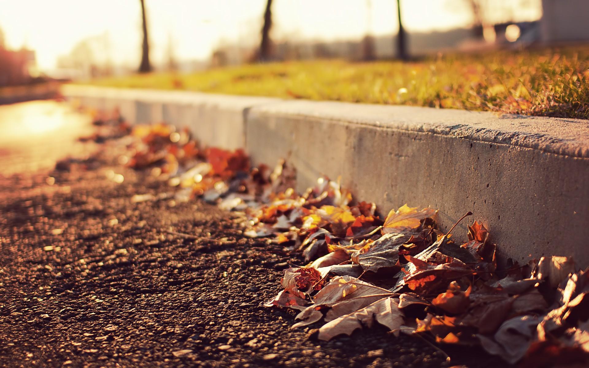 Дорога из осенних листьев загрузить