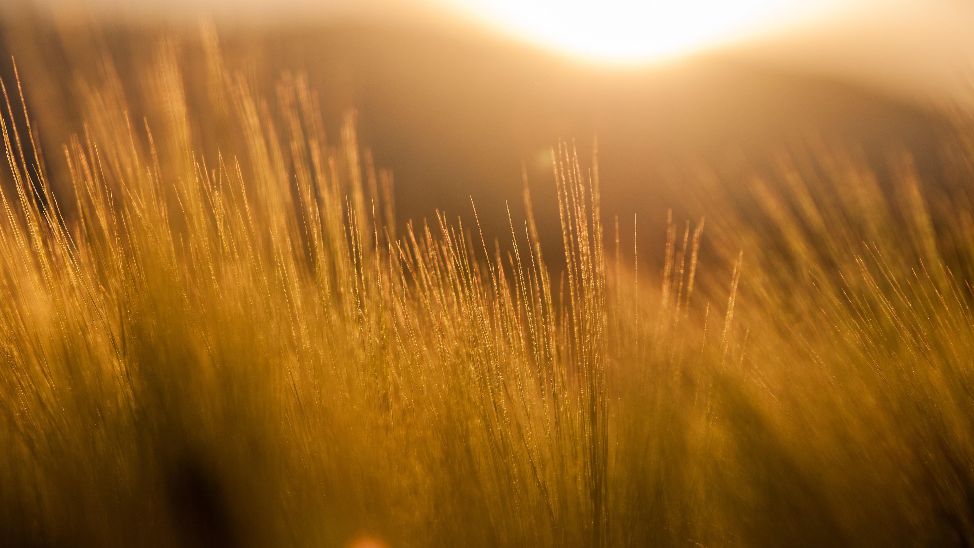 Лучи солнца в поле скачать
