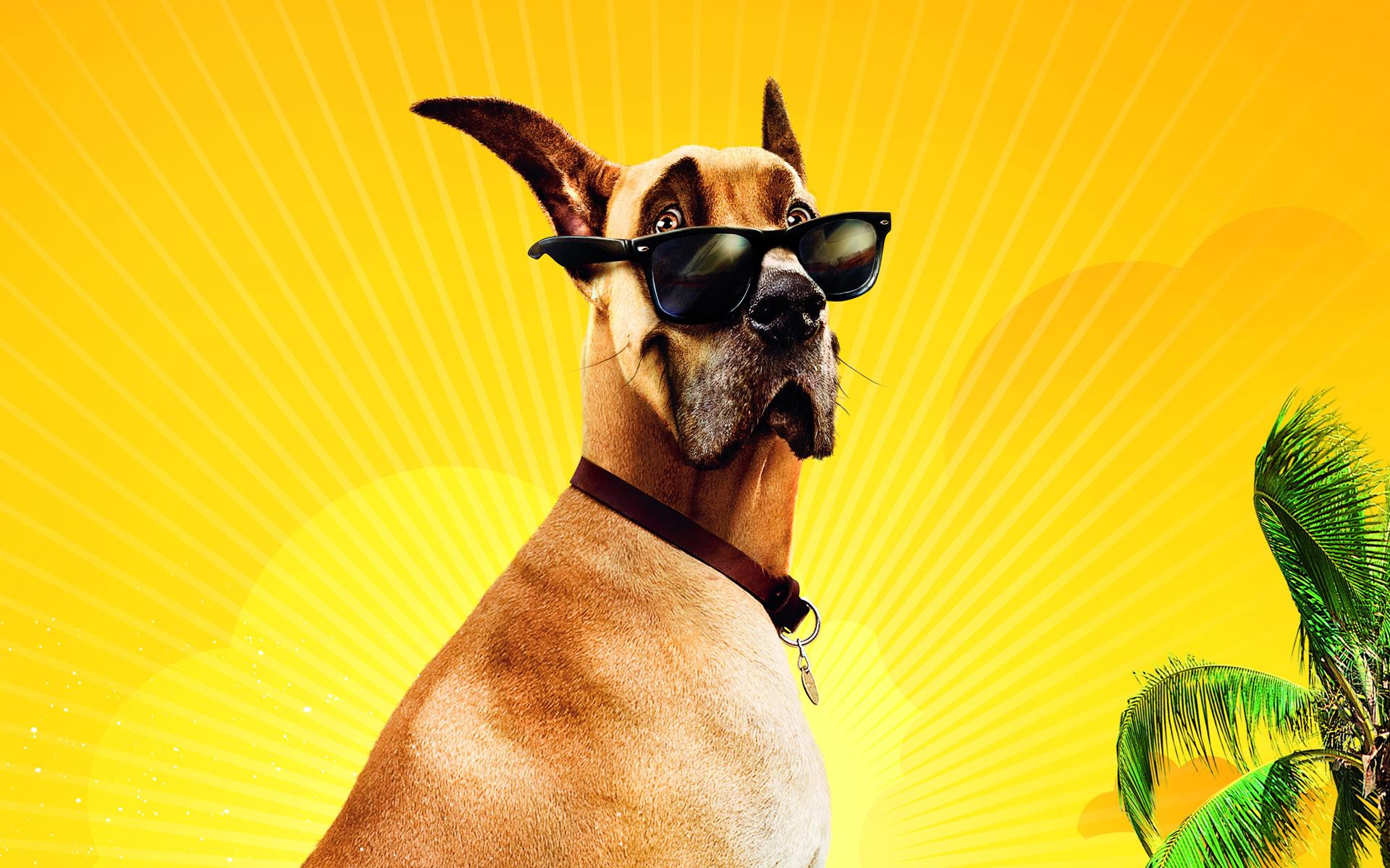 Певец собака юмор очки  № 1527438 бесплатно