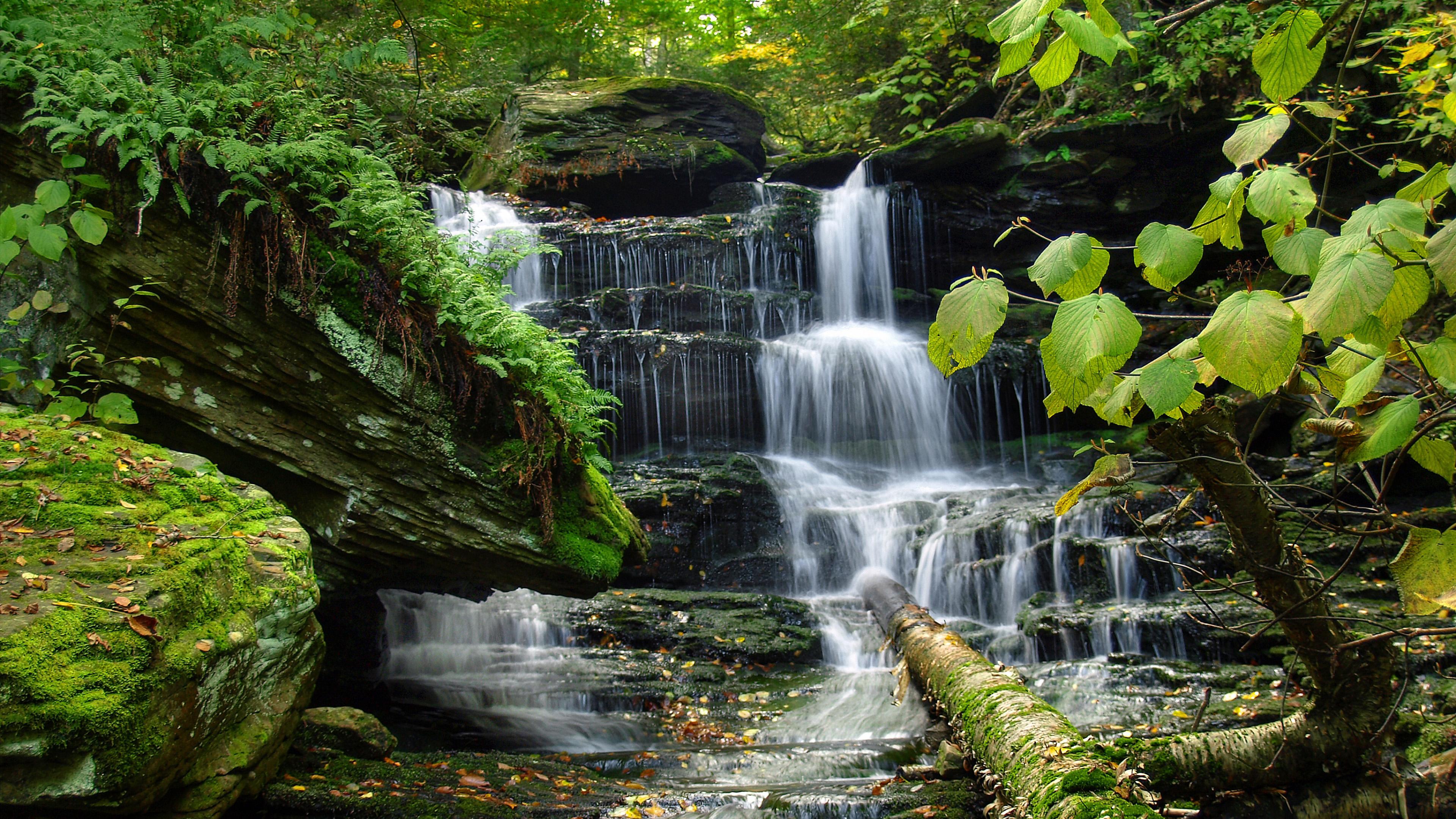 природа водопад деревья онлайн