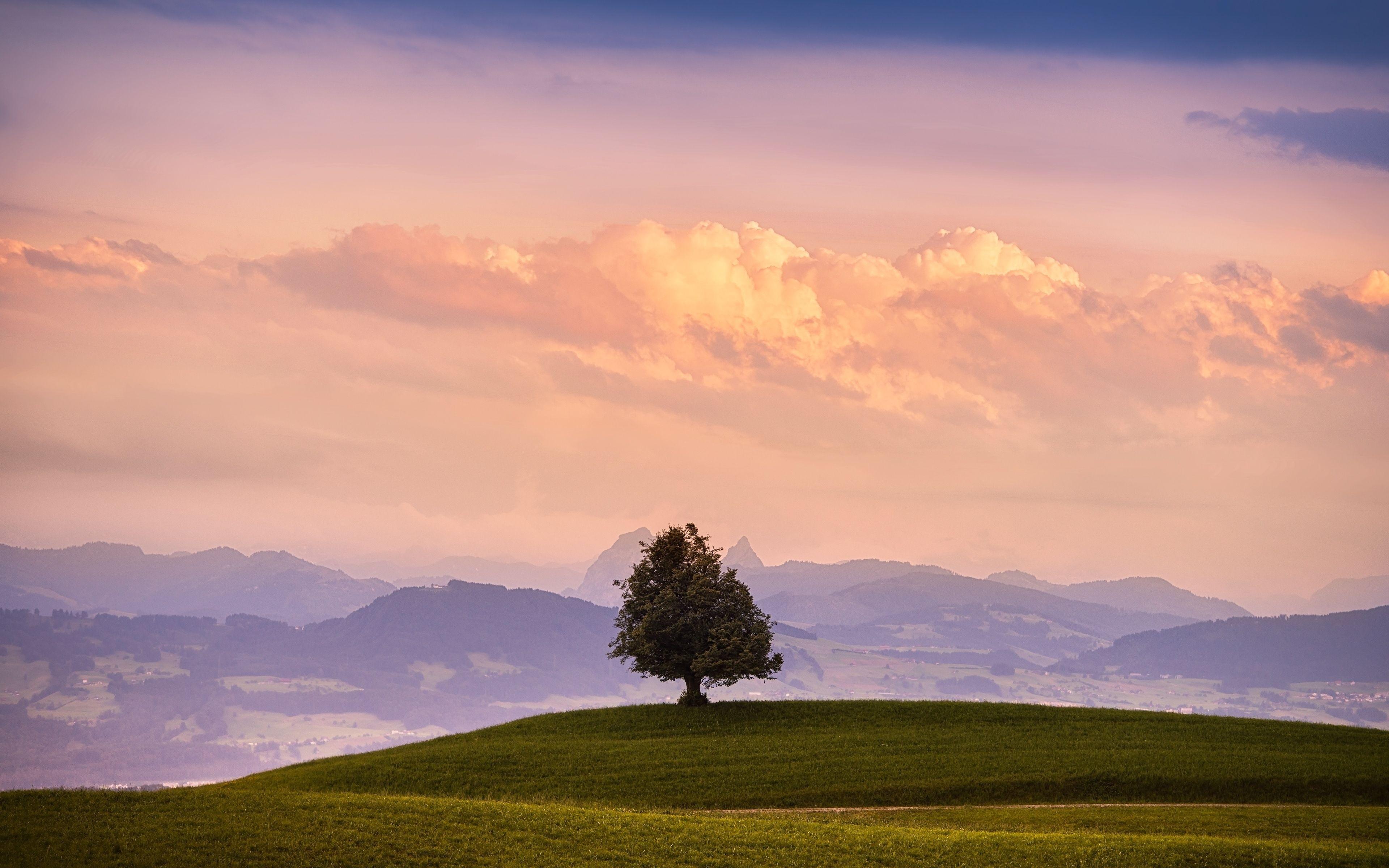 природа небо облака деревья поле nature the sky clouds trees field  № 243768 загрузить