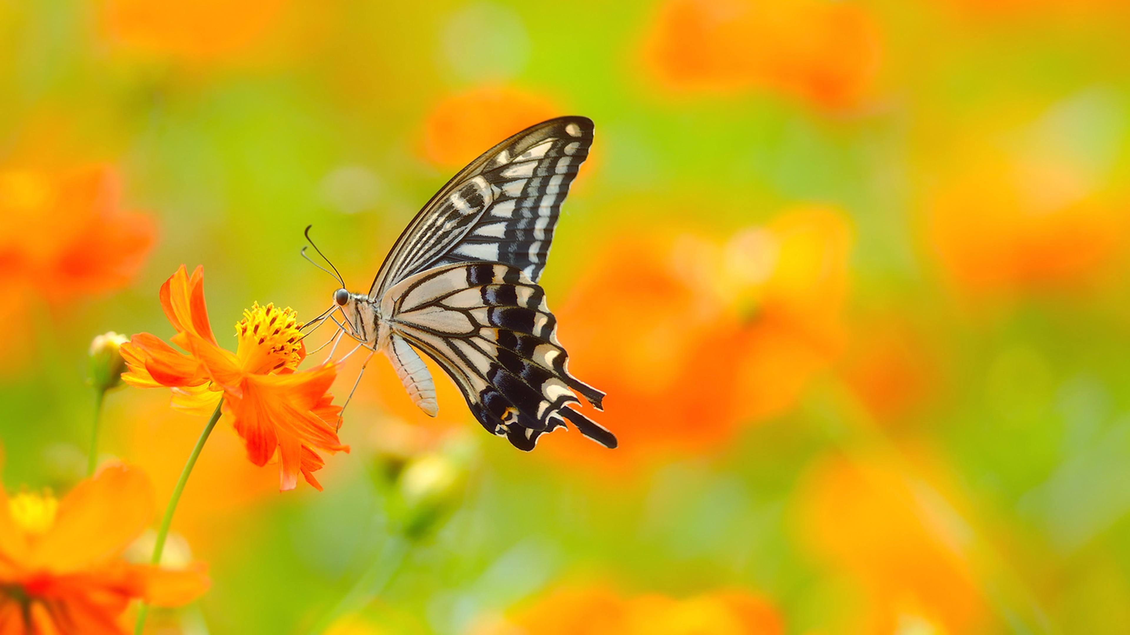 цветы,желтые,бабочка  № 664948 бесплатно
