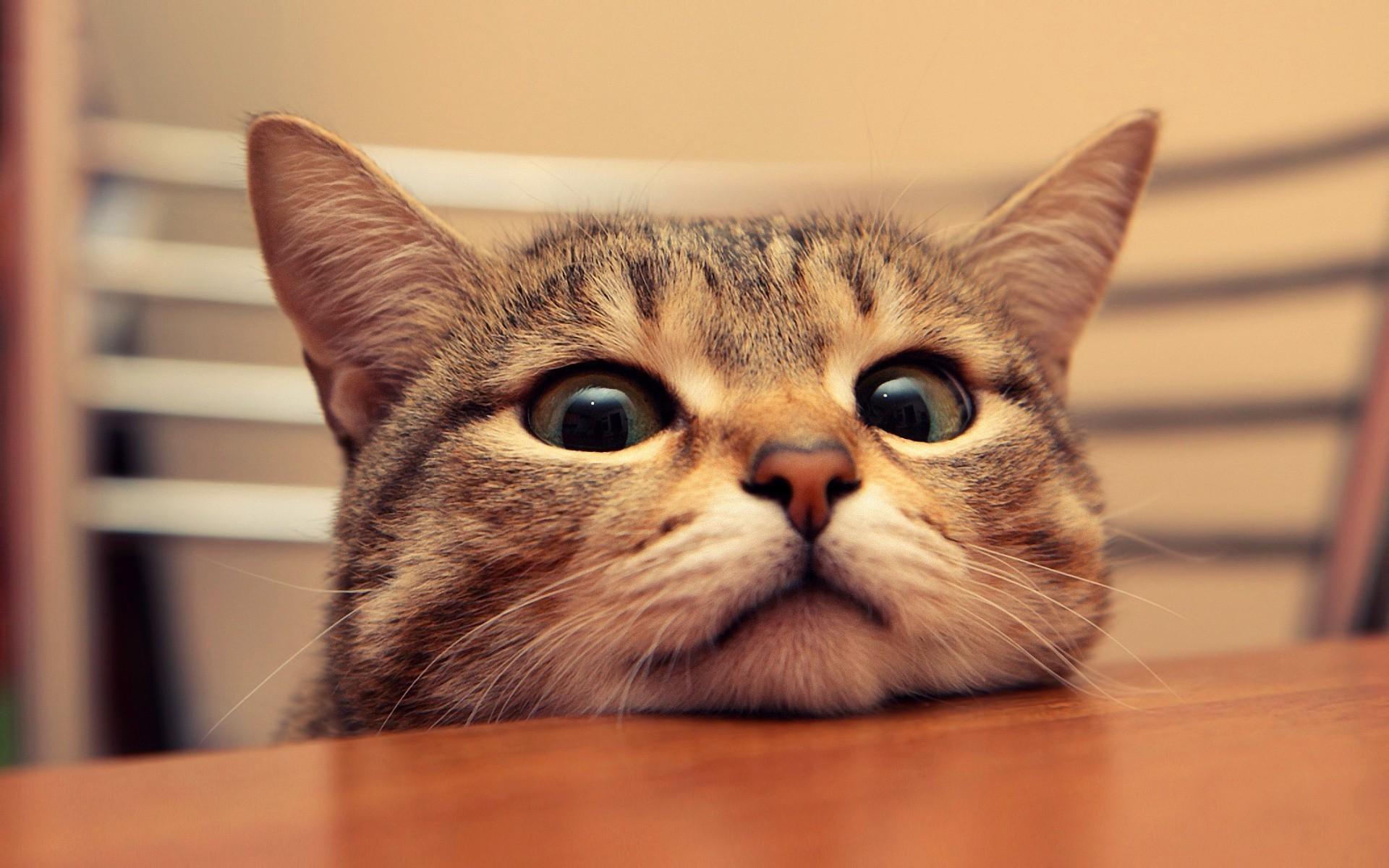 H приколього котика на рабочий стол