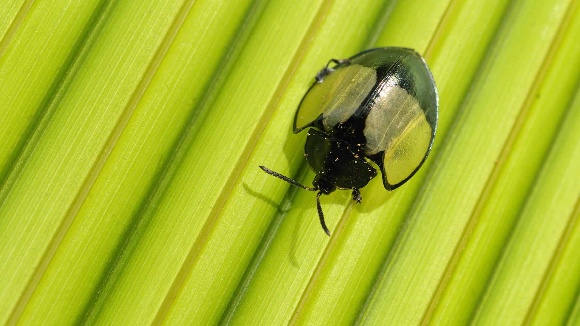 природа макро насекомое жук загрузить