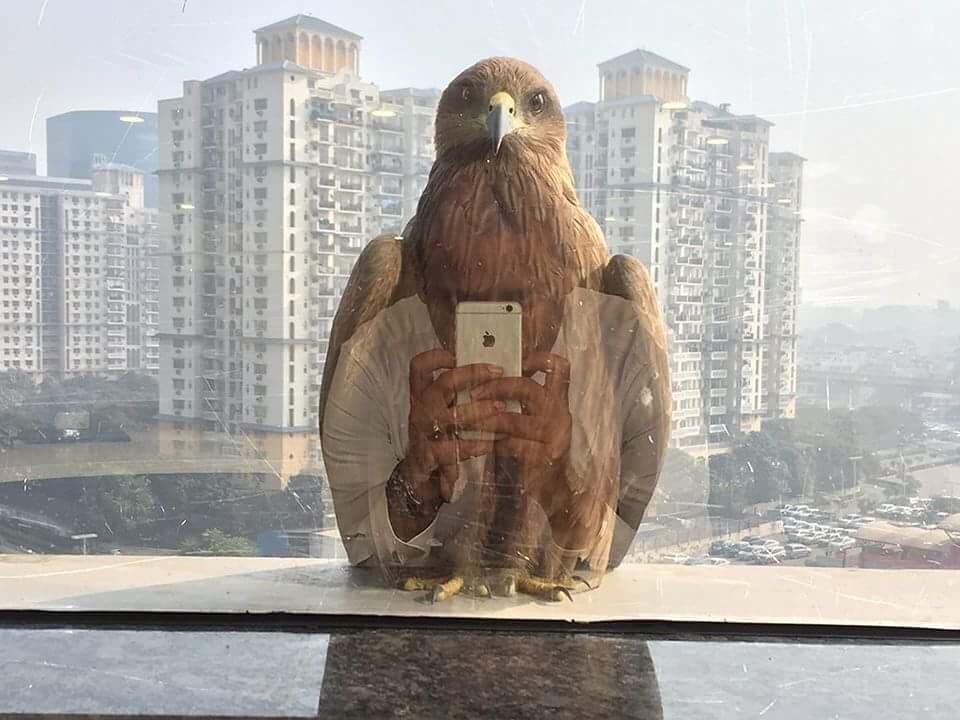 Картинка орел прикол