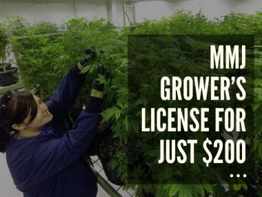 Get a medical marijuana grower's license without leaving your sweet home. You can see our board-certified doctors online, and save your valuable time. We are offering a Halloween discount $49 off on the grower's license.  In business for many years, we have served thousands of patients to date. Our licensed doctors are dedicated to providing quick services. Our simple process involves-  -> Fill a form online -> See a doctor through HIPAA-compliant software -> Receive PDF grower's license via email  Our website: https://fastmarijuanacardglendale.com/